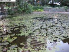 brisbane_city_garden2