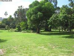 brisbane_city_garden6