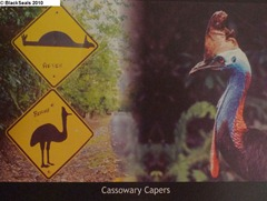 Cassowary_Capers