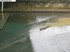 crocodile_farm1