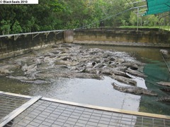 crocodile_farm2