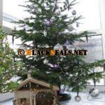 Frohe Weihnachten und besinnliche Feiertage