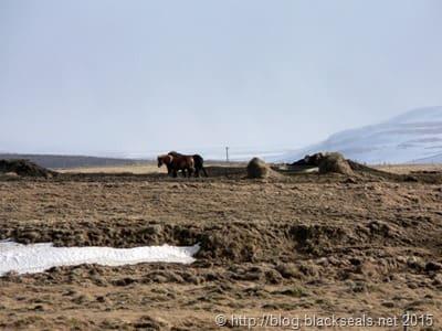 island_pony
