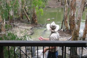 Hartley's Crocodile Adventures, Cairns