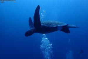 Galapagos 2015